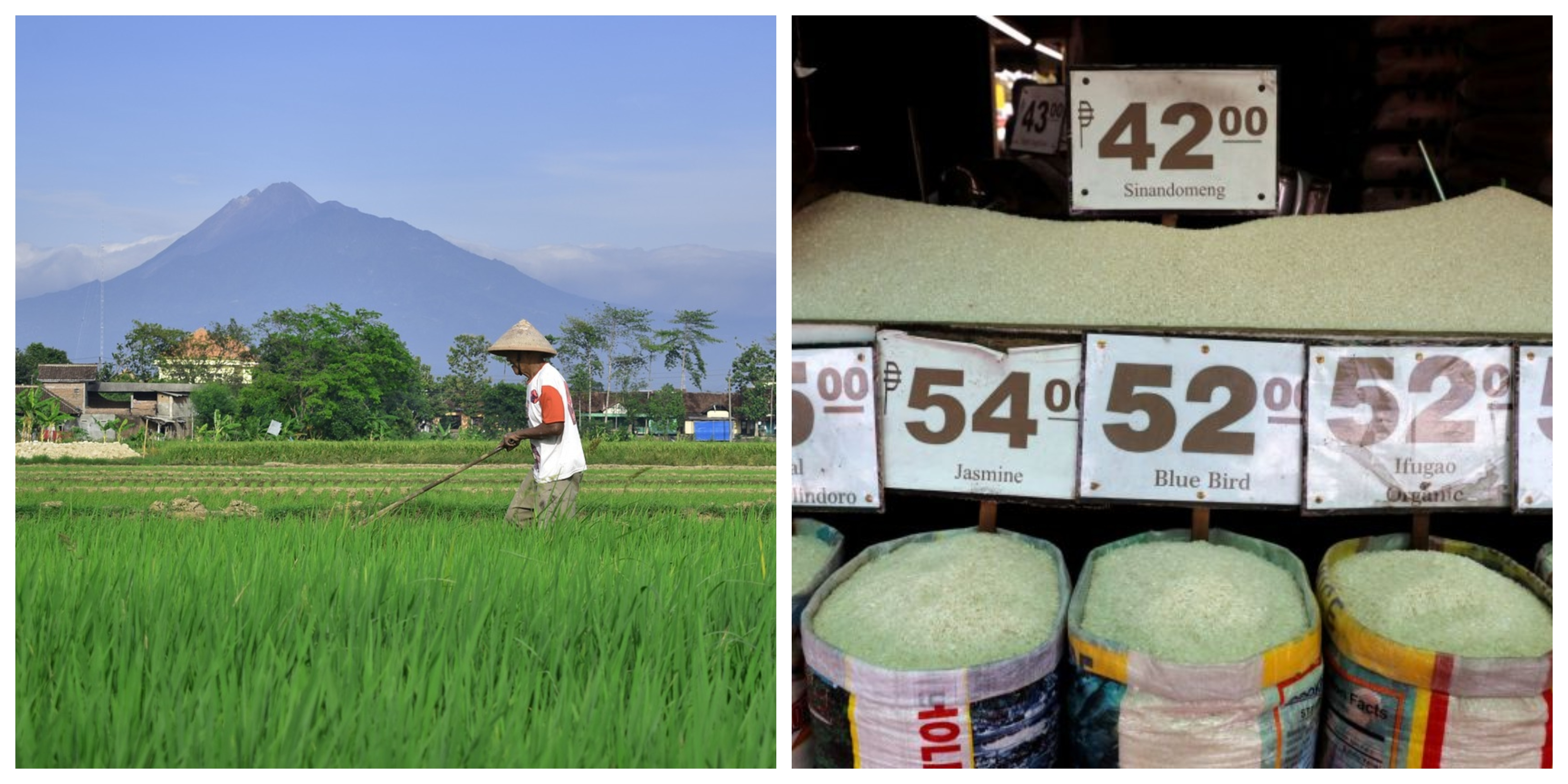 Collage of a rice farmer toiling in the field (photo from pixabay.com) and of Philippine rice traders' selling price (Photo from Reuters)